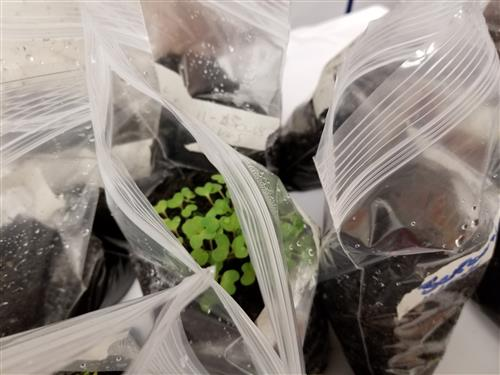 Growing plants in a bag